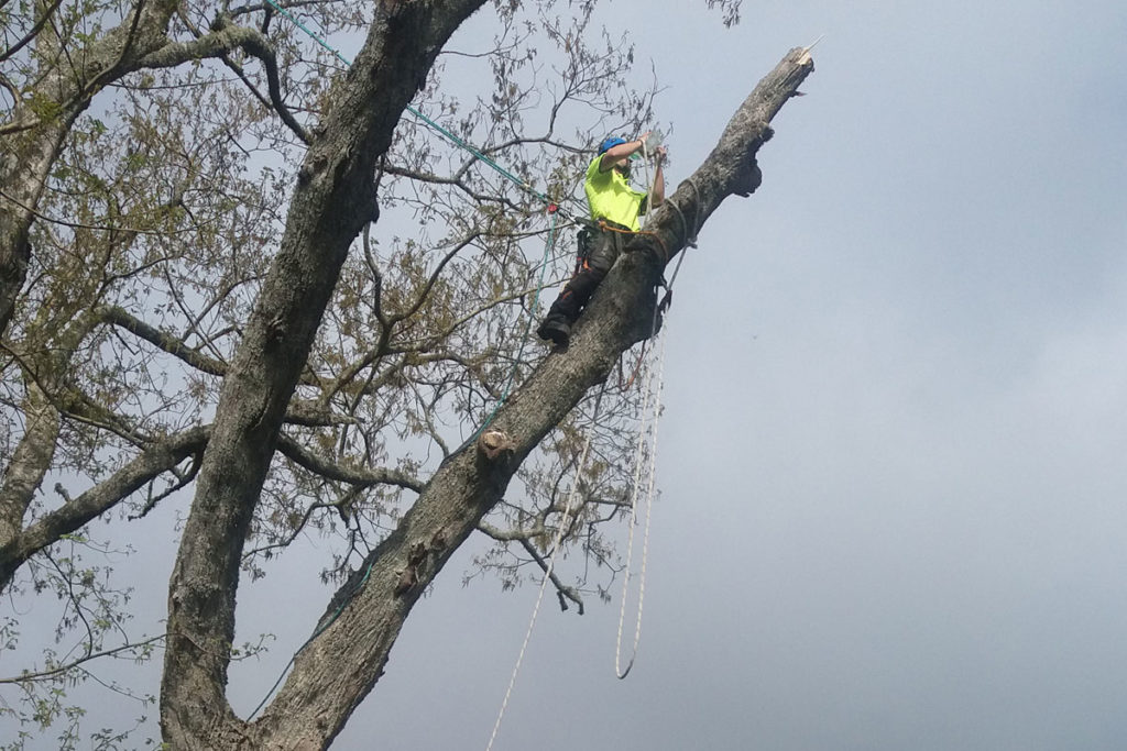 Dismantling Tree