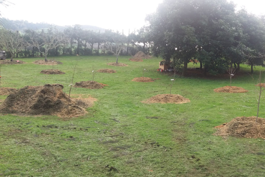 Orchard Replanting