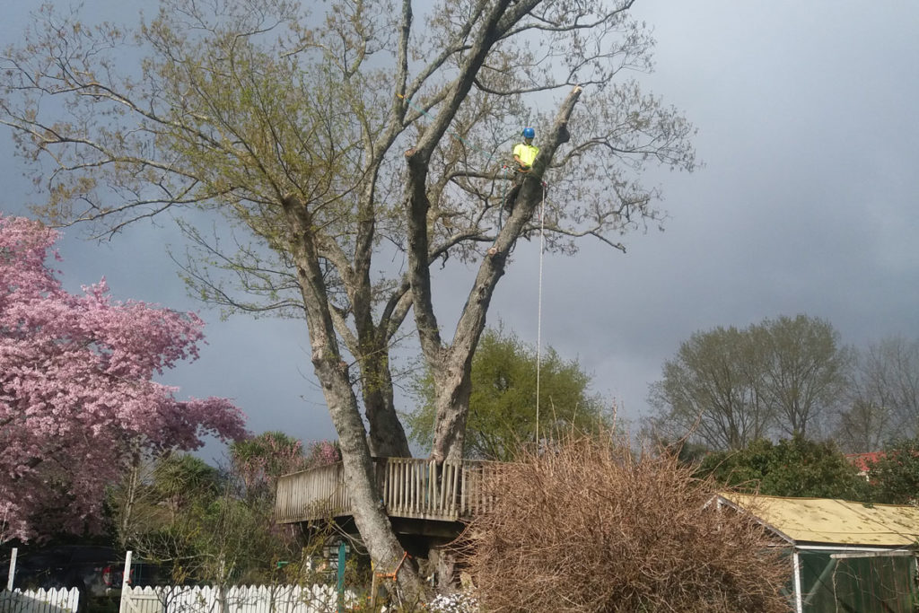 Tree Dismantling Above Playhouse