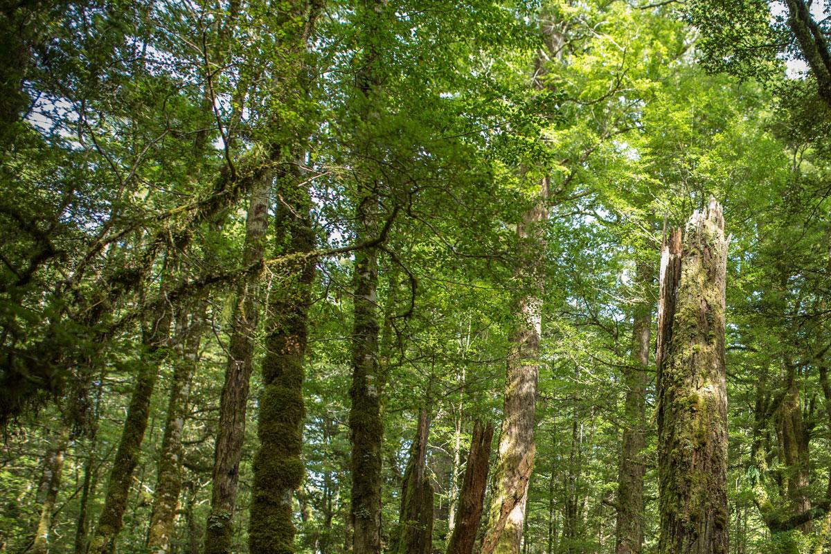 Arborist Consulting Service