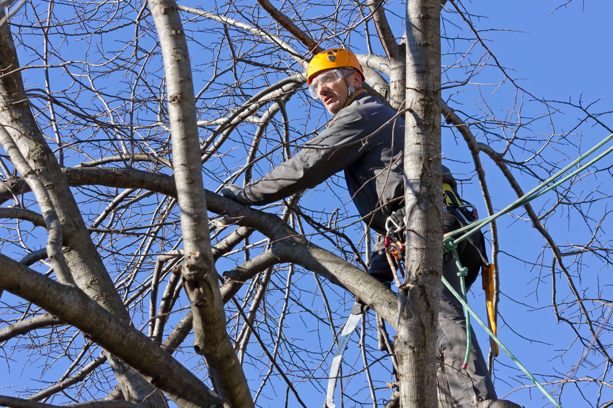 Pruning & Thinning Trees Services